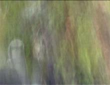 PATH 1</br />video, 2005